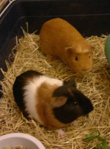 Sunny and Harry in their cage